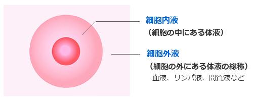 細胞内液と細胞外液の説明図